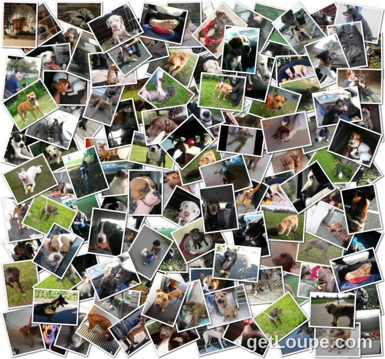 RHU Animals Helped 2012 Made using Loupe - a fun & fast way to make cool creations with your photos.