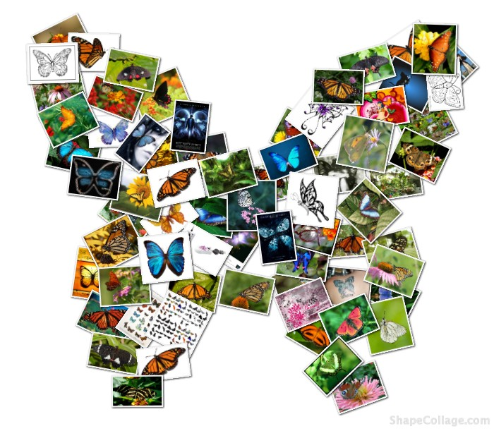 Butterfly Collage Butterfly pictures in the shape of a butterfly!