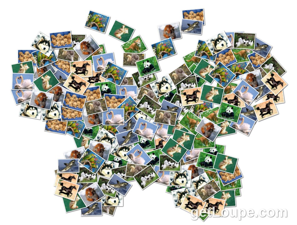 collage de animales loupe collage loupe. Black Bedroom Furniture Sets. Home Design Ideas