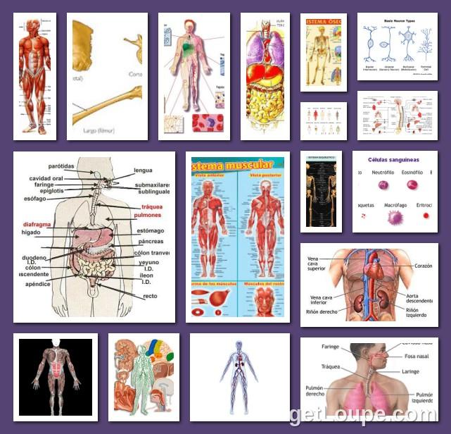 Organos y Sistemas | Loupe Collage | Loupe